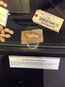 The Oldest Peanut in the World was grown by A.B. Stott in 1890.